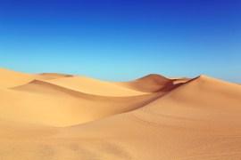 Sahara-Hitze da - heimische Wildtiere bleiben cool