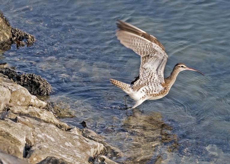 Frankreich Jagd auf bedrohte Vogelarten gehört verboten