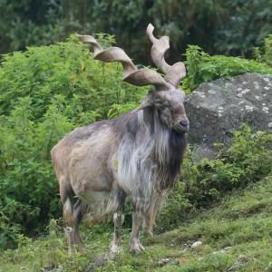 Debatten über Schutz hunderter Tierarten im August in Genf