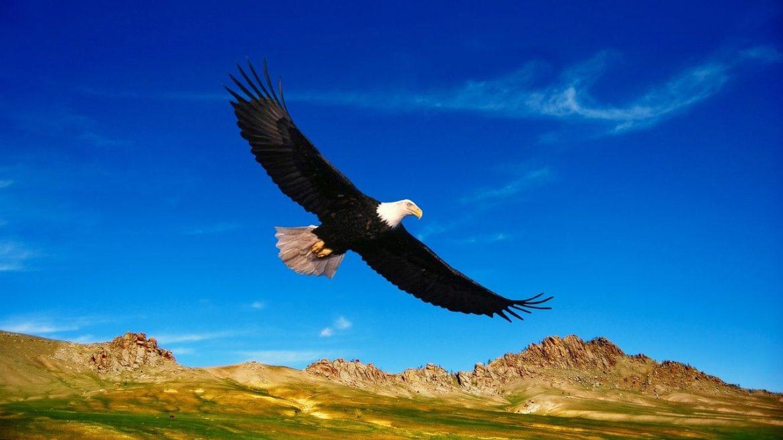 cropped-USA-Bedrohte-Tierarten-erhalten-weniger-Schutz.jpg