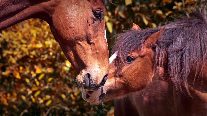 cropped-Tierschutzgesetz-schützt-nicht-das-Leben.jpg
