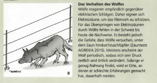 Graubünden: Von Schafhaltern und diffusen Behörden