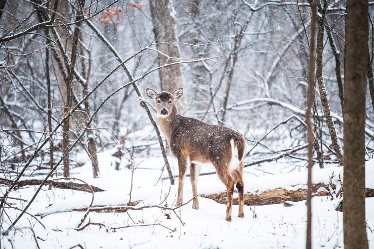 Hobby-Jäger in Graubünden haben versagt