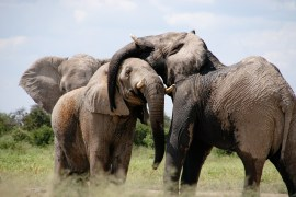 Tierschützer verurteilen Simbabwes Ausfuhr von 32 wilden Elefanten für Zoos