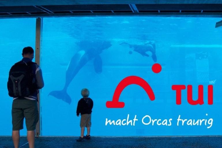 Tui macht Orcas traurig