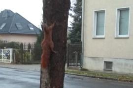 Eichhörnchen Tierquälerei
