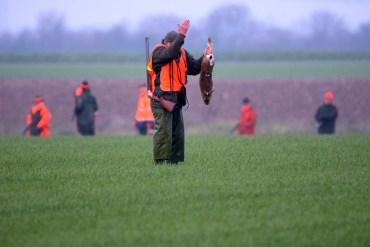 Deutschland Anzahl der getöteten Feldhasen gestiegen