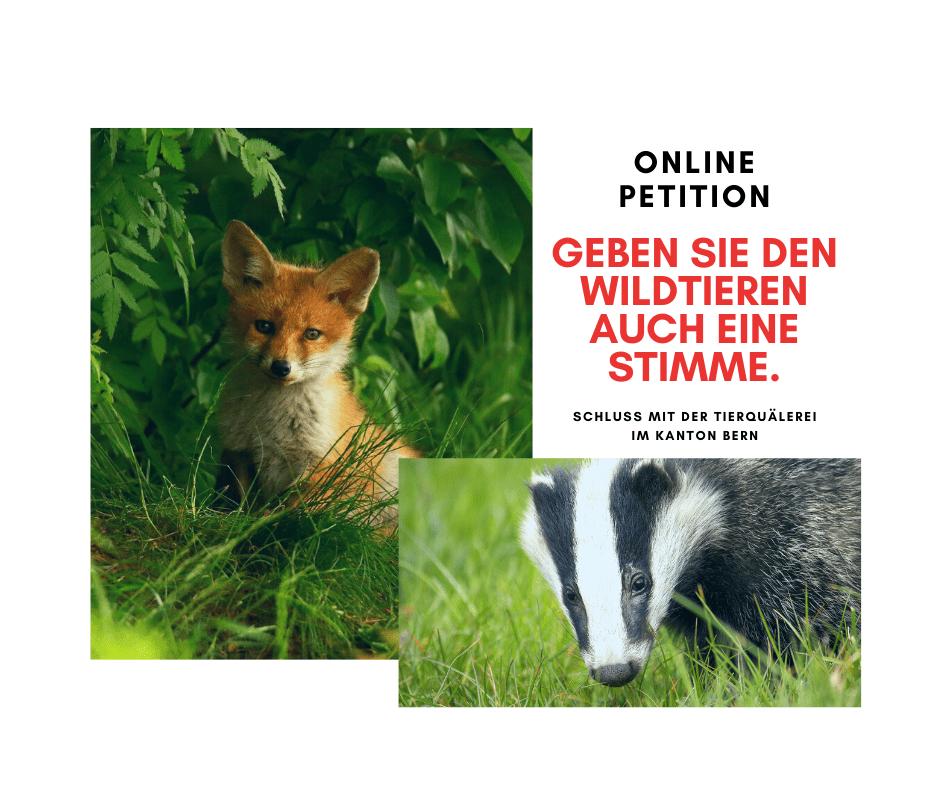 Fuchs Bern