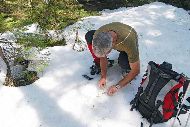 In akribischer Kleinarbeit sammelt Pierre Mollet Auerhuhnkot. So kann mit genetischen Methoden die Grösse einer Population geschätzt werden, ohne die Vögel zu stören.
