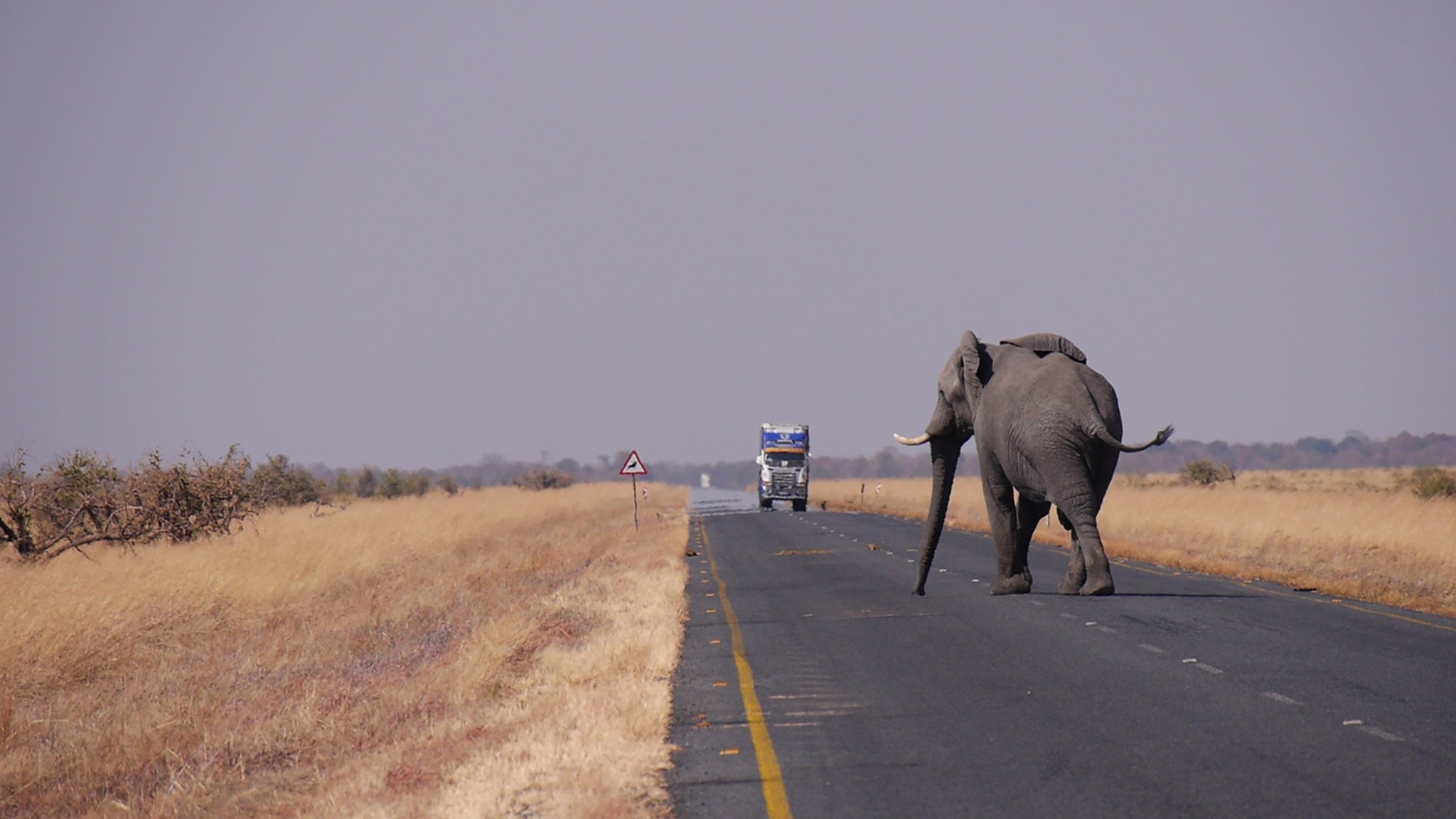 Botswana Ein Elefant kostet 35'000 Euro