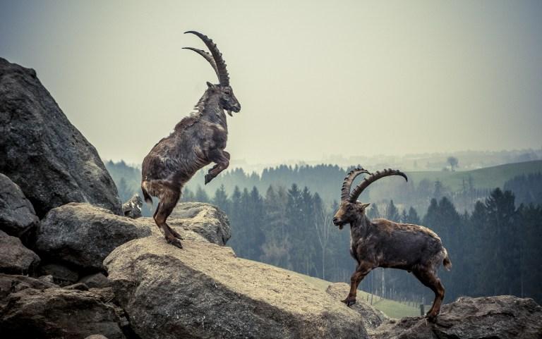 Leitkultur Zur Jagdkritik