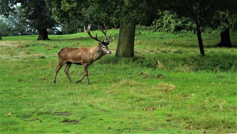Rindertuberkulose Schweizer Hirsche sind frei