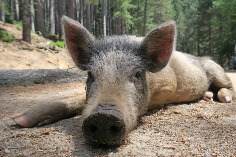 Korsika Ferientipp für Tierfreunde