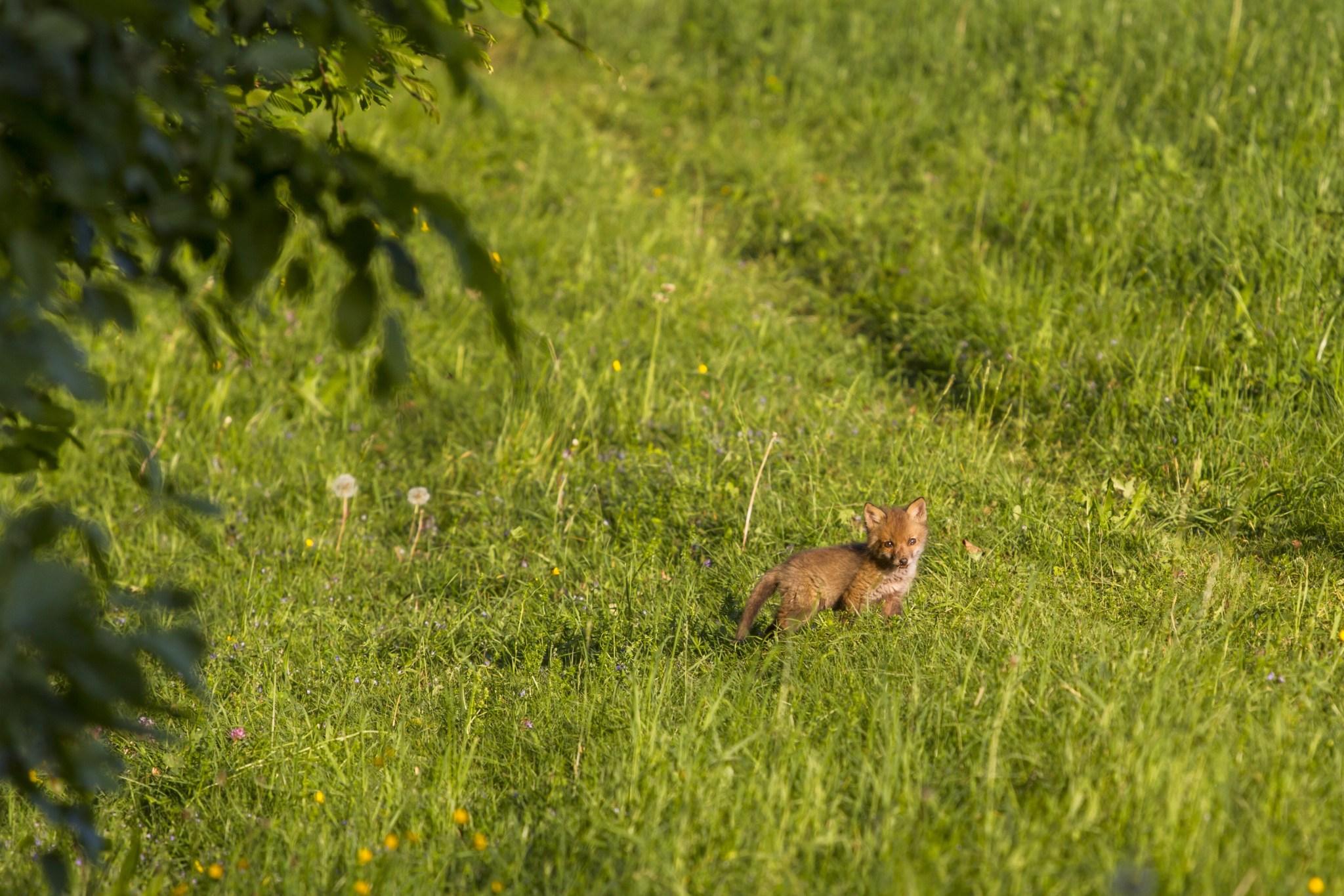 Wiener Tierschutzverein Junge Wildtiere schützen