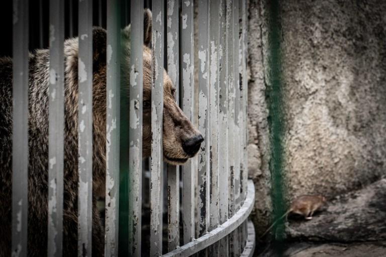 Albanien Illegaler Wildtierhandel ist ausser Kontrolle