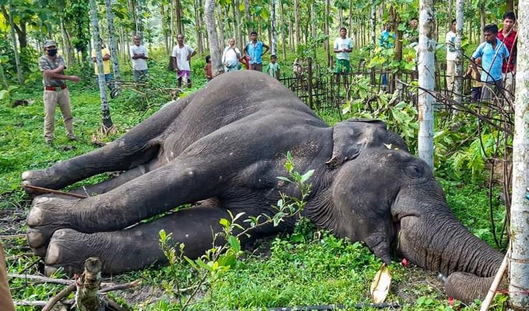 Tierquälerei und ihre Gesetze Der Fall der Kerala-Elefanten