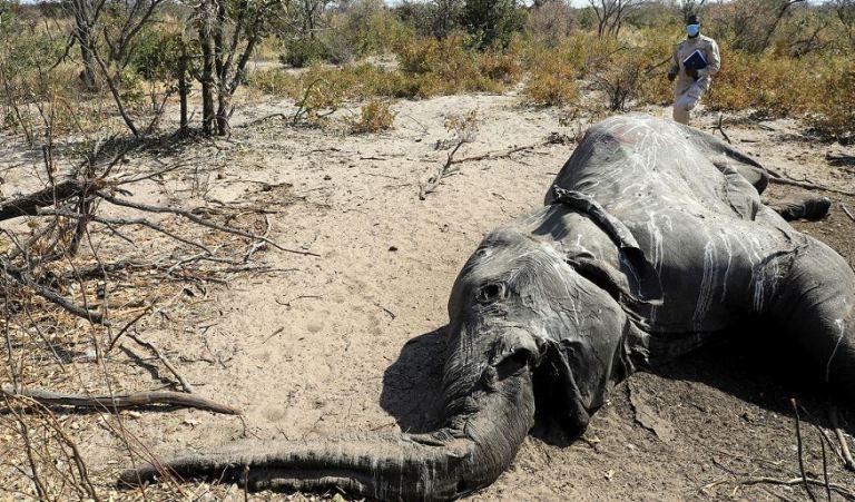 Elefantensterben Botswana