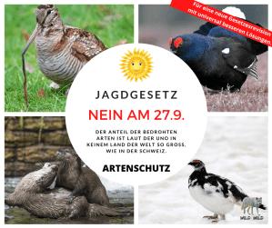 Jagdgesetz NEIN am 27.9. https://wildbeimwild.com/jagdgesetz/jagdgesetz-nein/35007/2020/04/11/