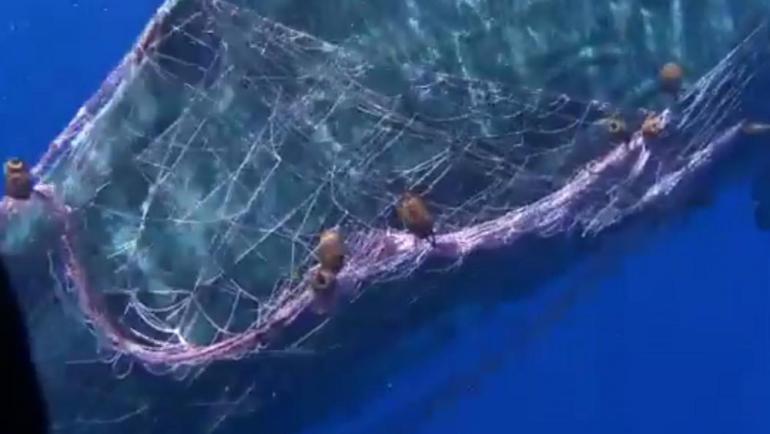 Sizilien: Pottwal gerät in illegales Fischernetz