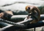 Schweizer Zoos Werden von Dreiviertel der Deutschschweizer befürwortet