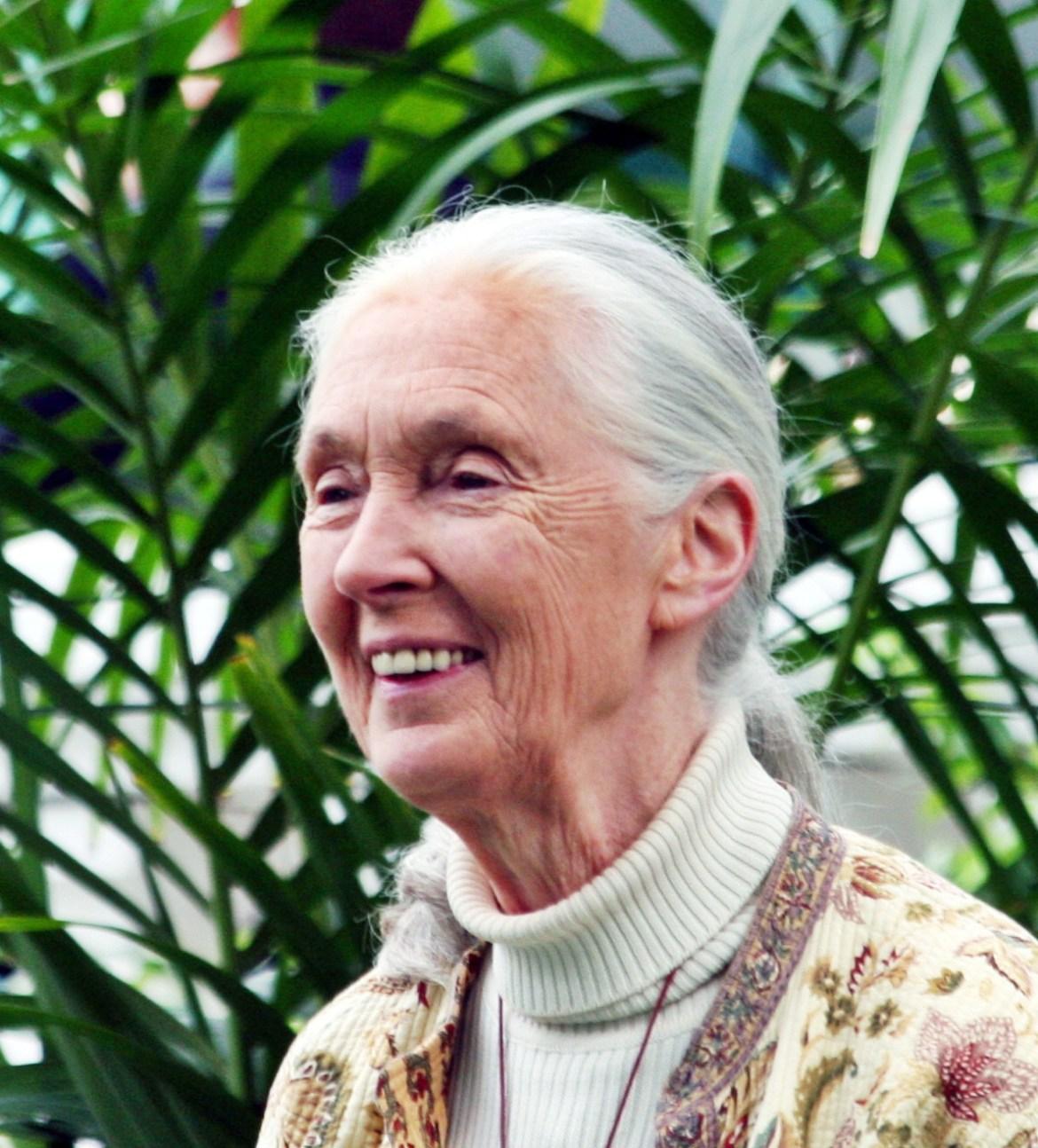 Jane Goodall Trophäenjäger bedrohen gefährdete Tiere