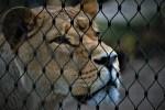 Julia Klöckner kündigt halbherziges Wildtierverbot im Zirkus an