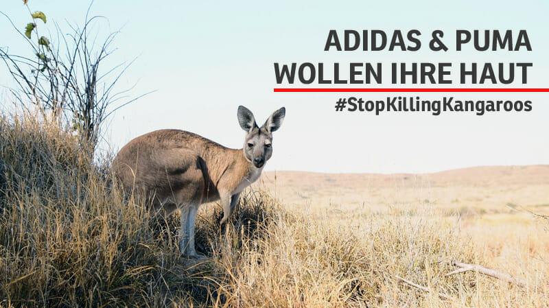 Kähnguruleder: Tierschutzorganisationen fordern Verkaufsstopp von Schuhen