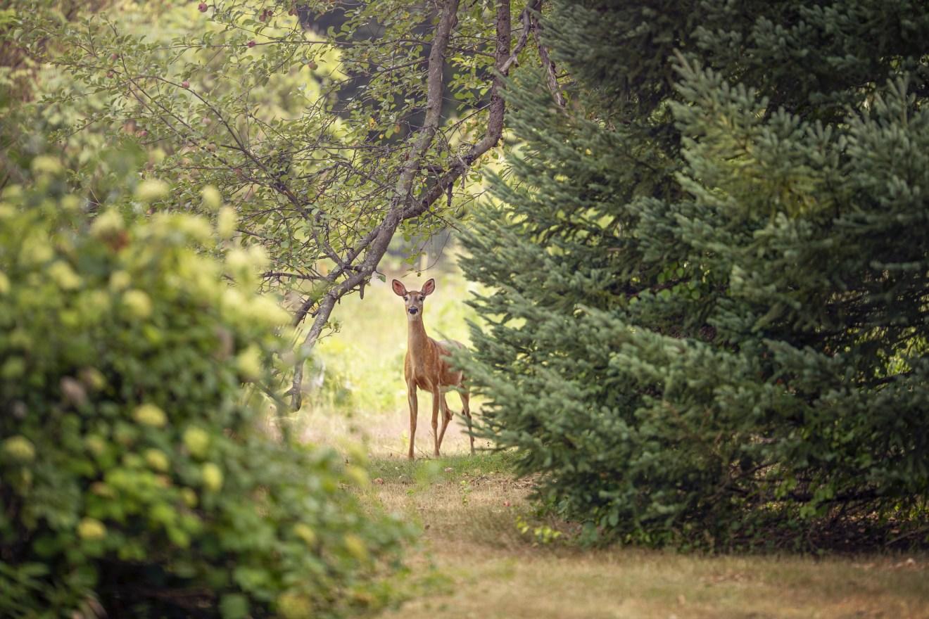 Graubünden: Tierquälerische Sonderjagd 2020
