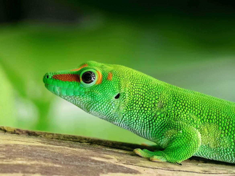 Wissenschaftliche Publikationen animieren Reptilien-Händler