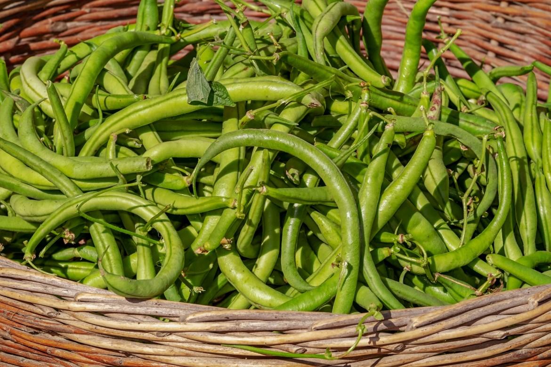 Grüne Bohnen in Kadhisosse