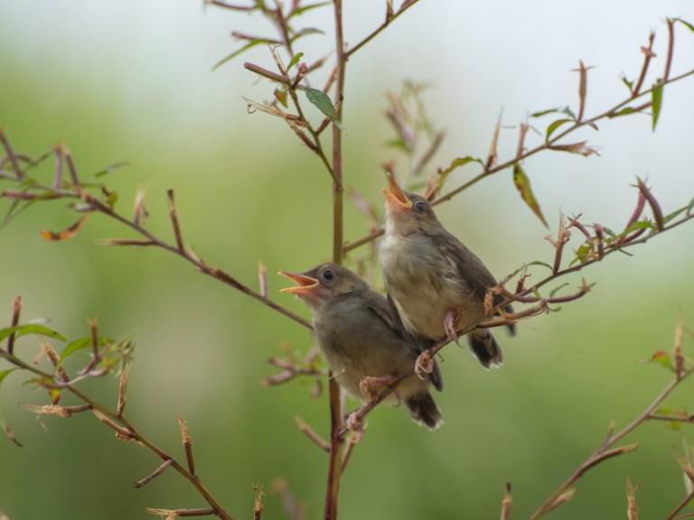 Brutzeit der Vögel beginnt mit Gesang