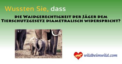 Tierschutzgesetz