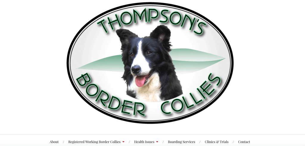 Thompson Border Collies