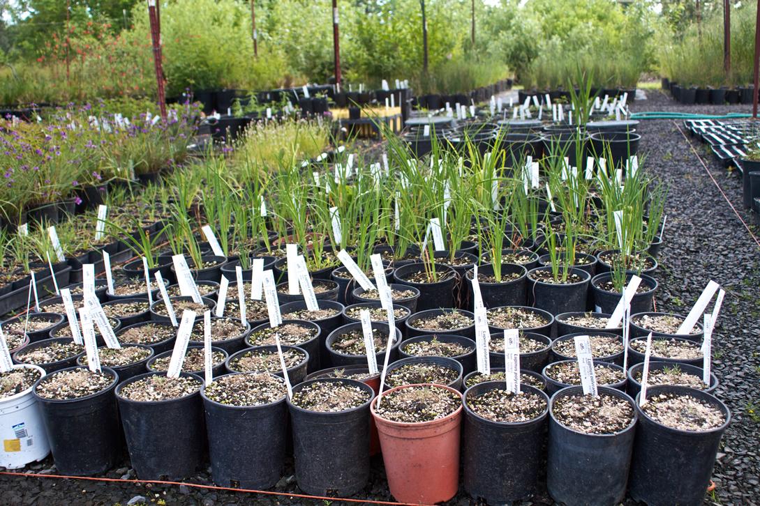 plant nursery seedlings photo