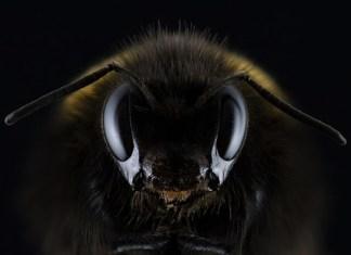 Insect Apocalypse