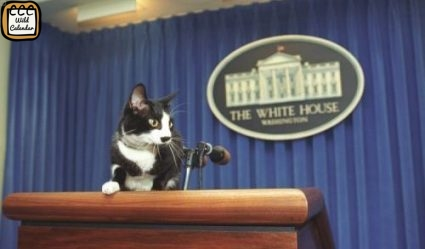 Cats for President Day