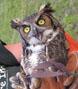 owl202thumb