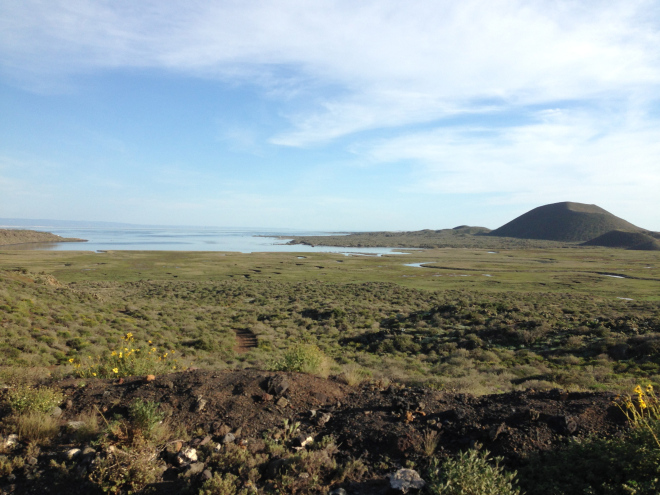 The wetlands of San Quintin are the most important and largest remaining in the Southern California-Baja California Eco-Region.