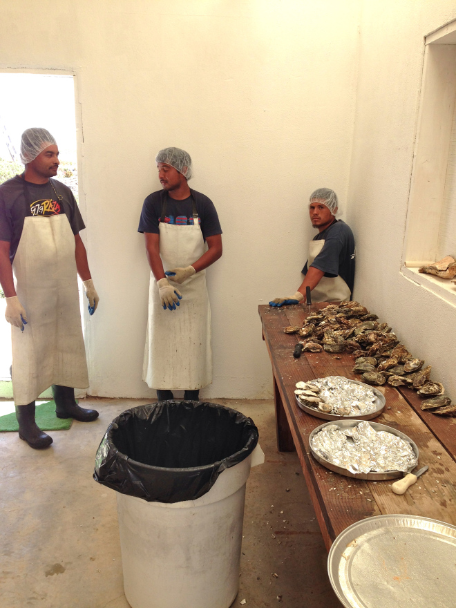 Oyster workers - this activity sustains more than 70 families in San Quintin.