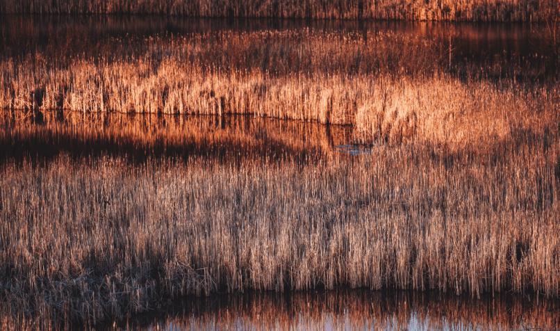 Wetlands store water