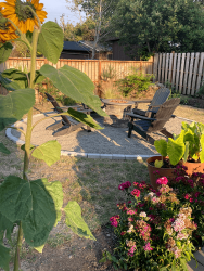 Millay House: Fire pit and plants
