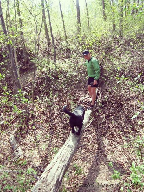 Teaching Wagter to 'walk the log'...