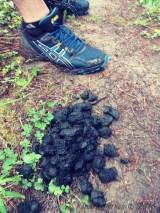 Some semi-warm bear-poop...