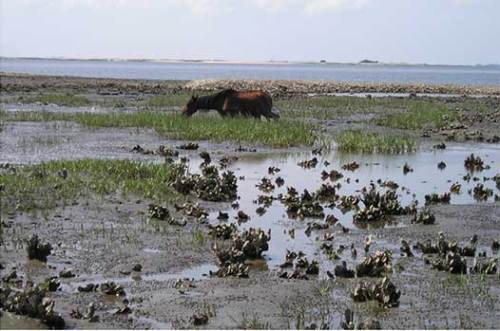 One potential grazing area is the salt marsh.