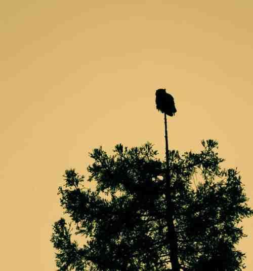 A Wise Old Owl Sat on an Oak