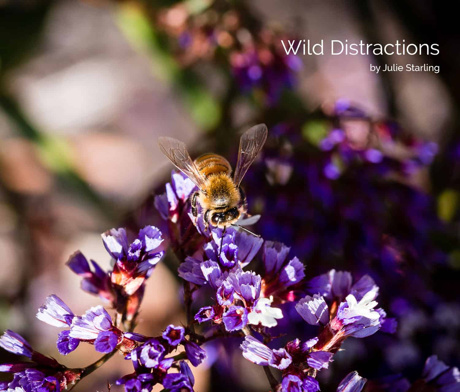Wild Distractions, Cover