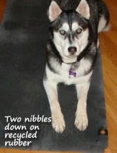 juno-down-dog