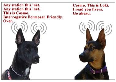 radio-cosmo2