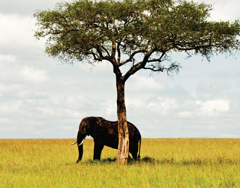 Top 8 Affordable Safaris in East Africa