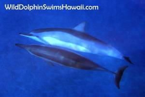 Dolphin Facts 11